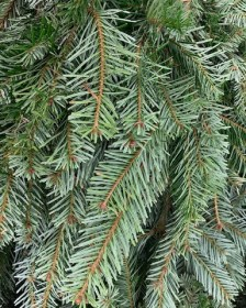 Christmas Spruce, Moss and New Products