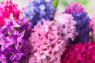 Find seasonal how to guides using Hyacinths - Triangle Nursery