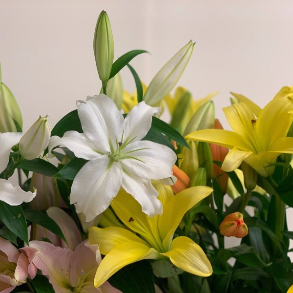 Discussion on Lilies