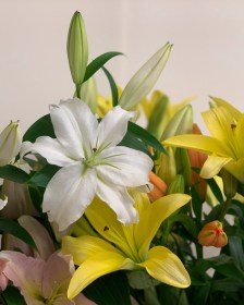 Flower Guides and DIY how-to tutorials with Triangle Nursery, flower wholesalers