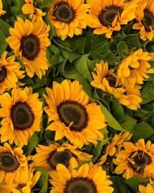 Find seasonal flowers here with Triangle Nursery