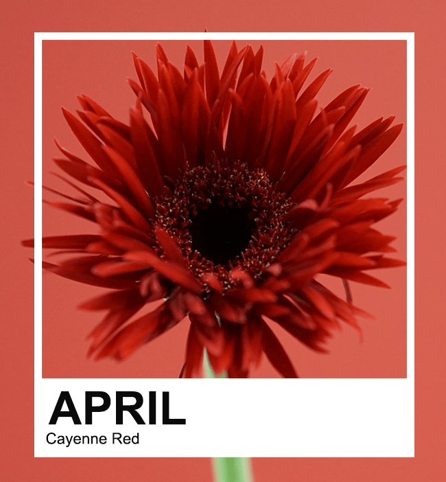 April Series: Cayenne Red