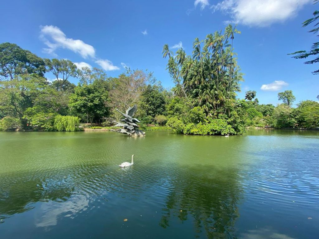 Pay a visit to Swan Lake, the oldest lake in Singapore Botanical Garden where you can watch beautiful swans glide through the waters.