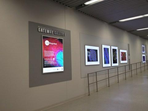 Dulles Airport Art - C Concourse