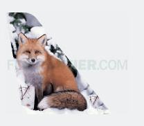 Frontier Fox