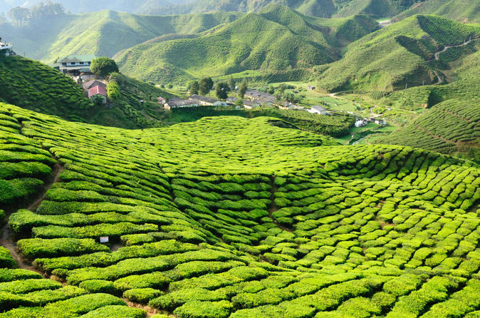 Cameron Highlands is one of the best places to visit in Malaysia