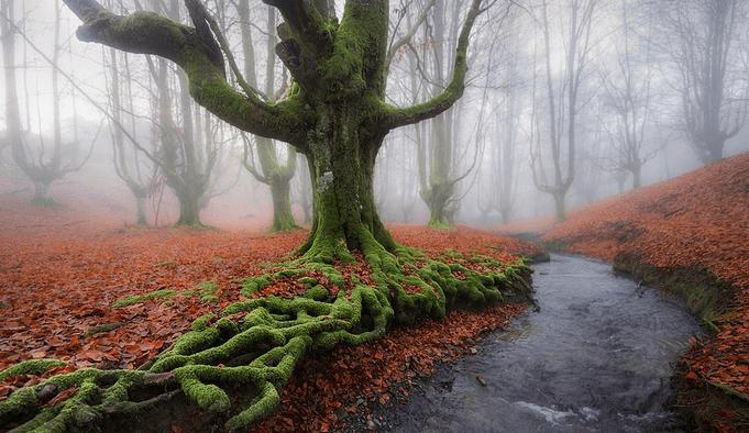 #9 – Otzarreta Forest, Spain.