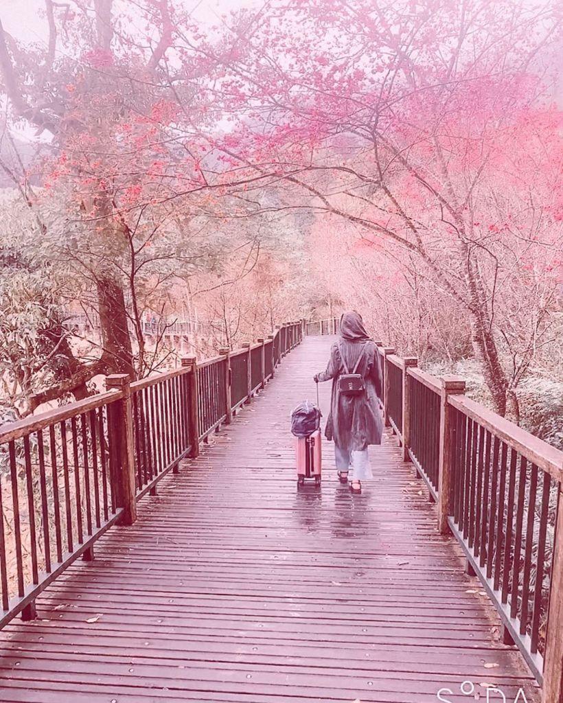 Tarikh Sakura Berkembang 2020