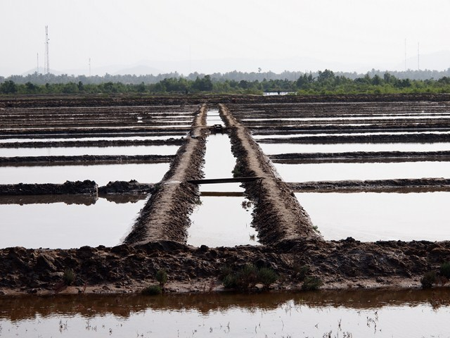 Salt fields, Kampot