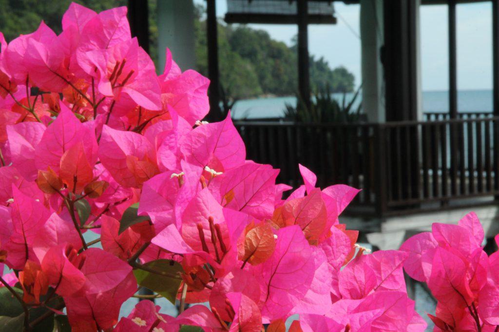 Resort ini terletak di atas bukit dalam kehijauan hutan hujan tropika Pulau Gaya