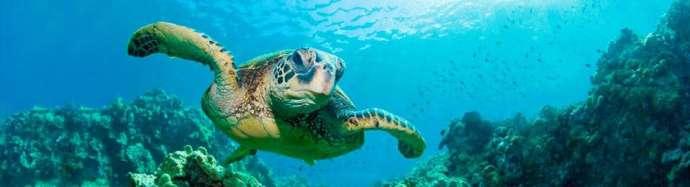 maui-scuba-diving-dives