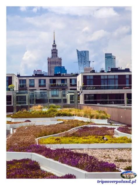 Ogród na dachu CNK