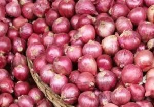 Central government prohibits onion seed exports with immediate effect
