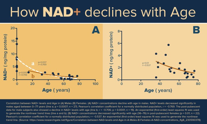 NAD+ declines with age