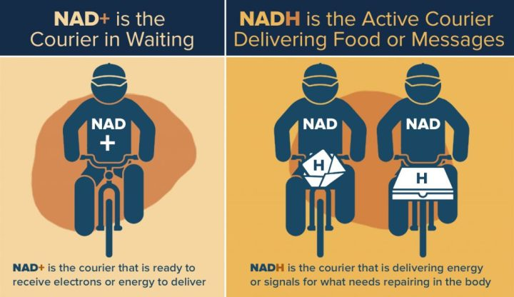 What is NAD+?