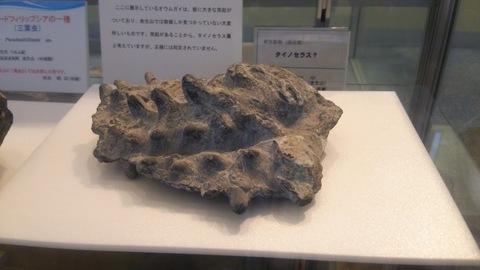 いぼいぼの化石