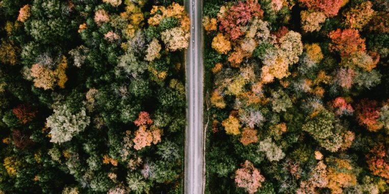 Road surrounded by fall foliage and trees