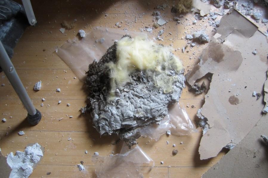 Nest Flip Side