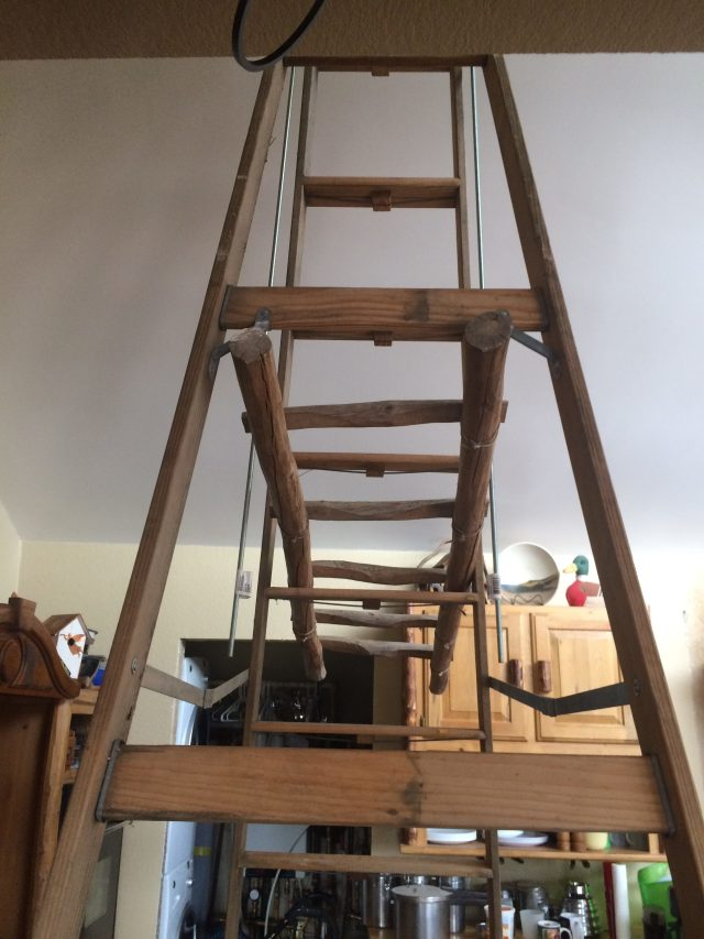 Twelve foot ladder to help hang shelf