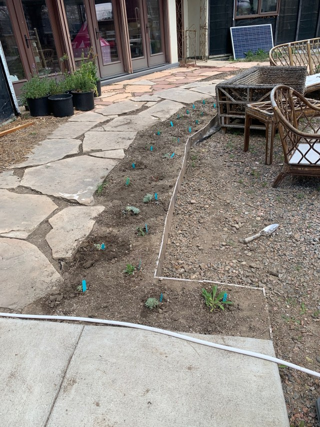 Planted xeriscape