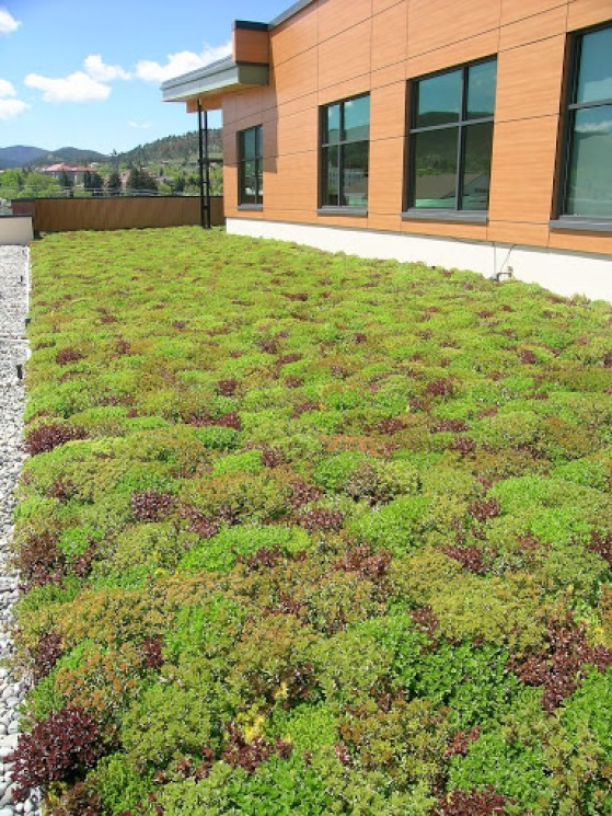 Intermountain Green roof with trays
