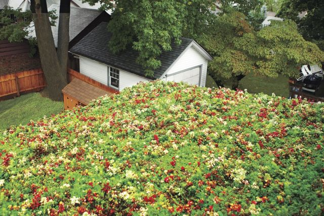 This Old House Green Roof