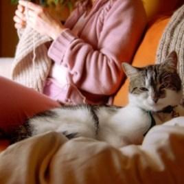 knitting.cat