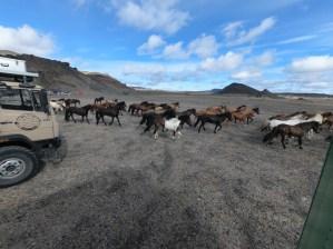 Pferdebesuch am Morgen