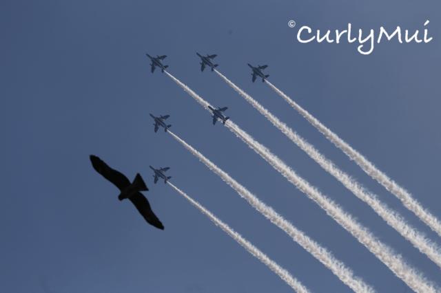 連天上的麻鷹和戰機也來湊熱鬧,真的是人間天堂!
