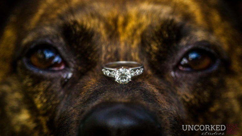Ring on Dog's Nose