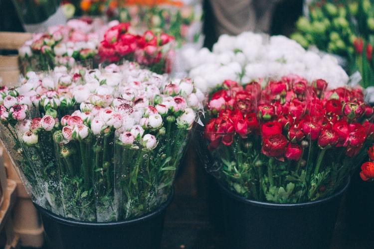 confira opções de flores para formatura