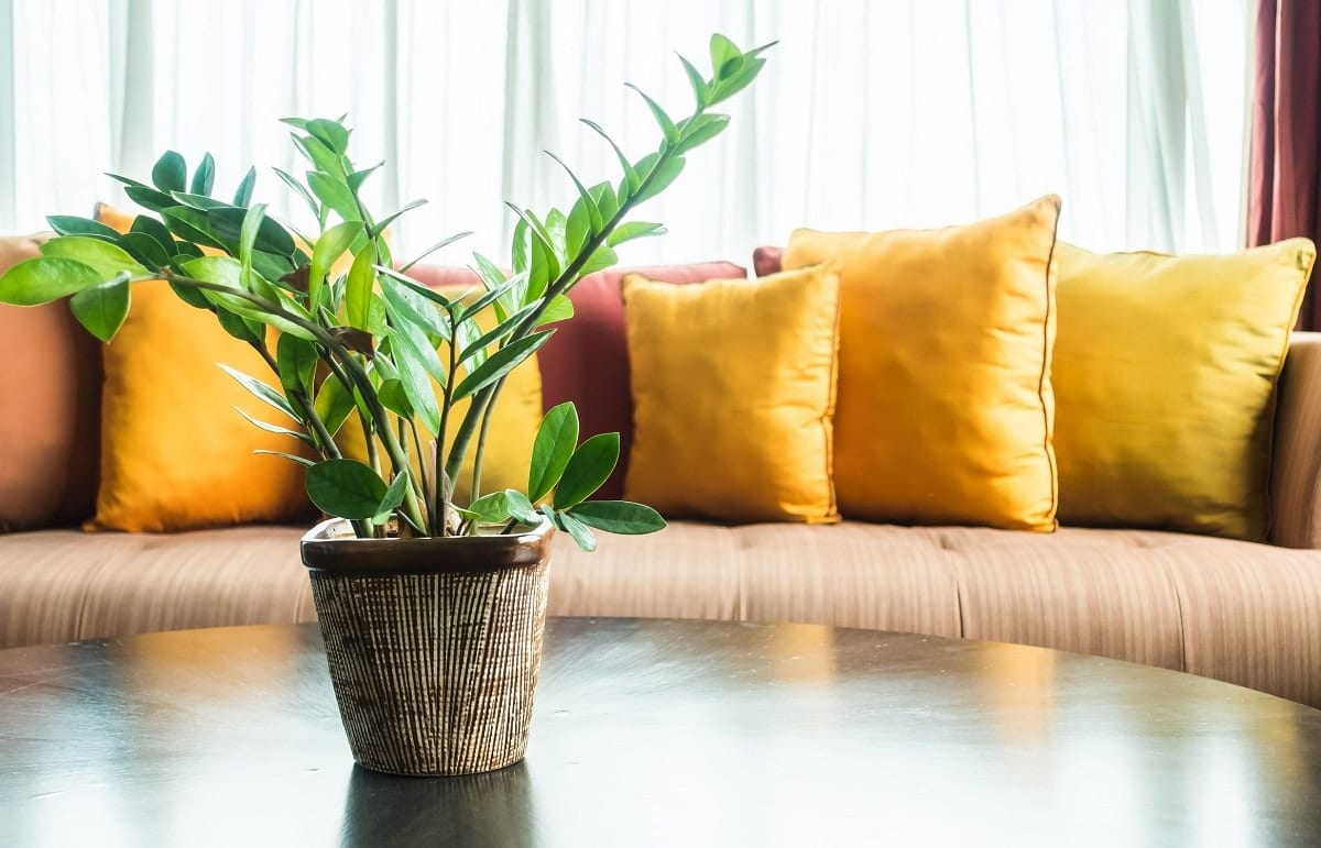 plantas ornamentais sombra