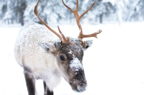 christmas-blog-post-reindeer
