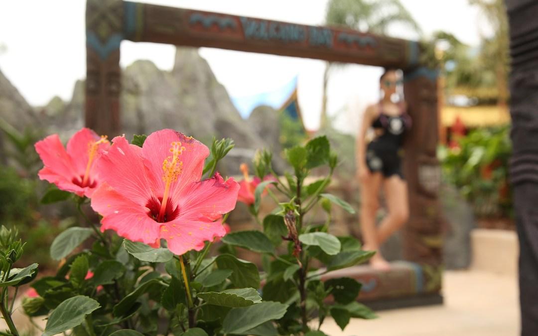 Volcano-Bay-Flower-Katelyn-Darrow