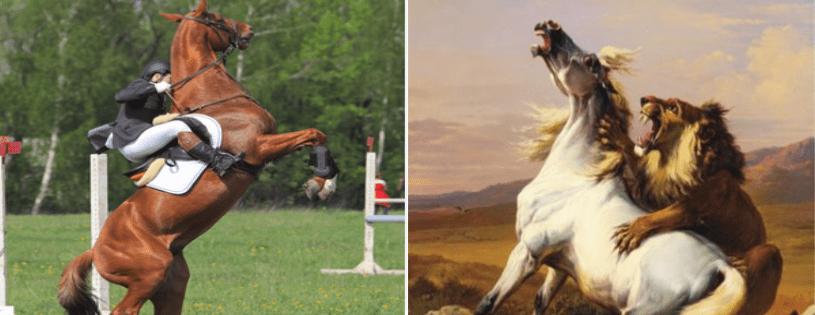 Perché i cavalli sono animali da preda?