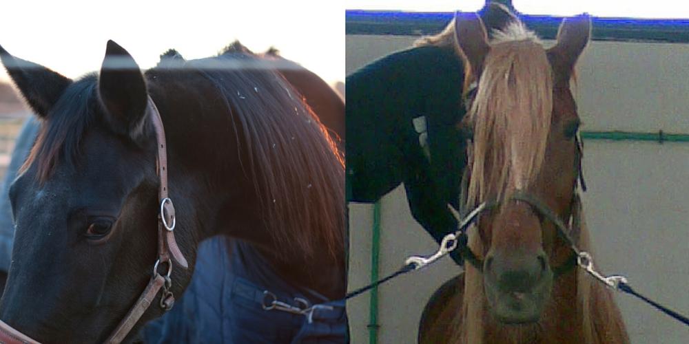 Adottare un cavallo in difficoltà: un ipotesi da considerare