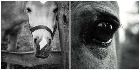 Blog cavallo dolore