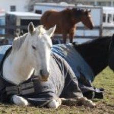 cavalli-anziani-2