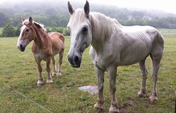 cavalli-anziani