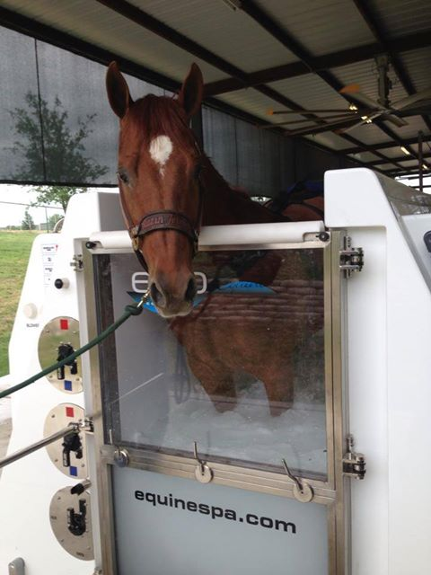 Horse spa 2