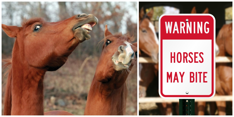 Cavalli aggressivi con il cibo