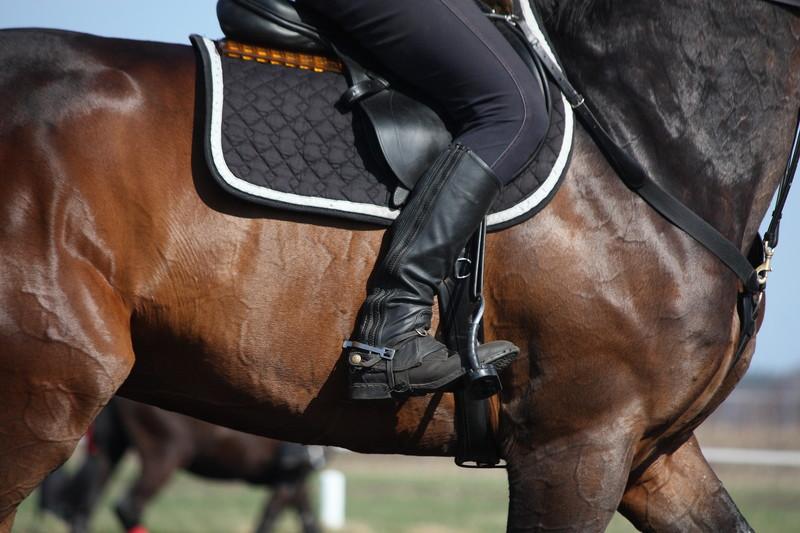 cavallo montato