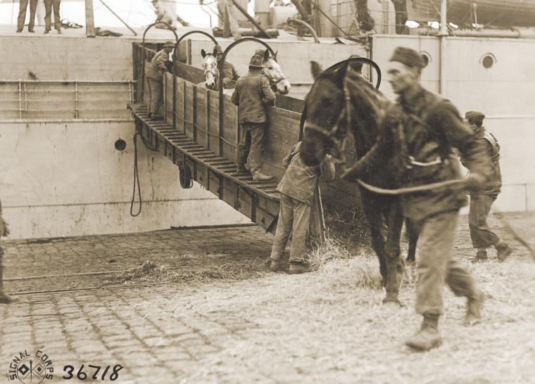 Cavalli in guerra