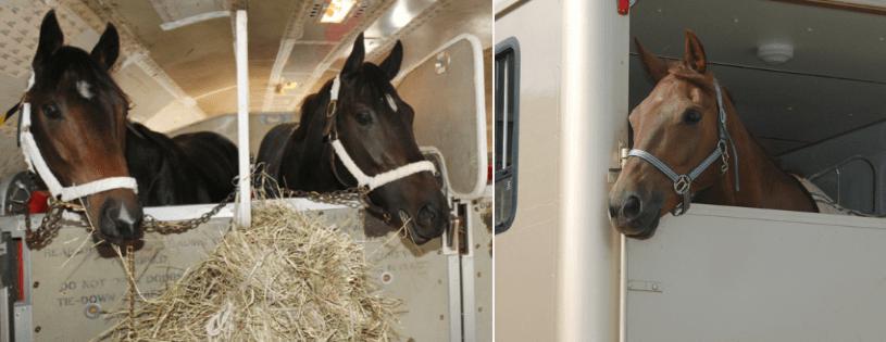 Cavalli in viaggio