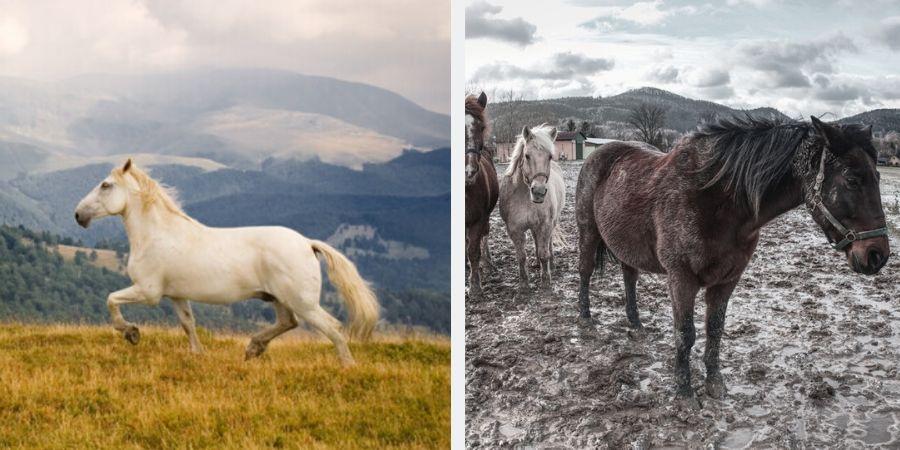 Il falso mito della gestione naturale