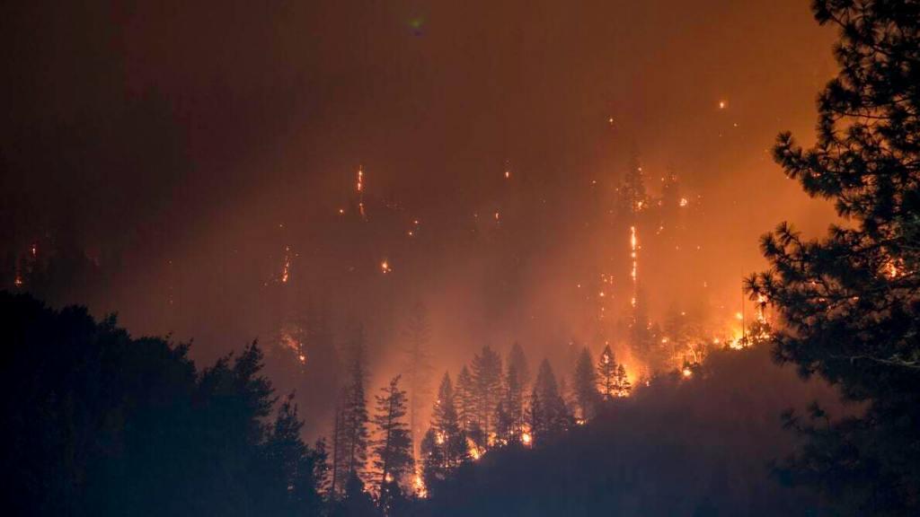 Incendio en bosque