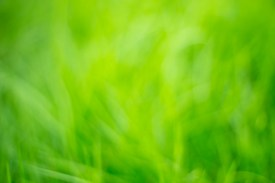 fondo-abstracto-natural-color-verde_7182-829