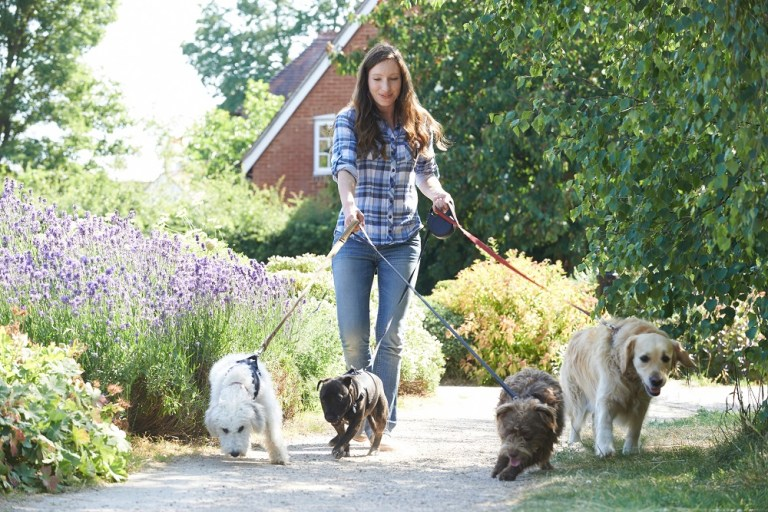 Buy Uber for Dog Walking app and Earn Big Money