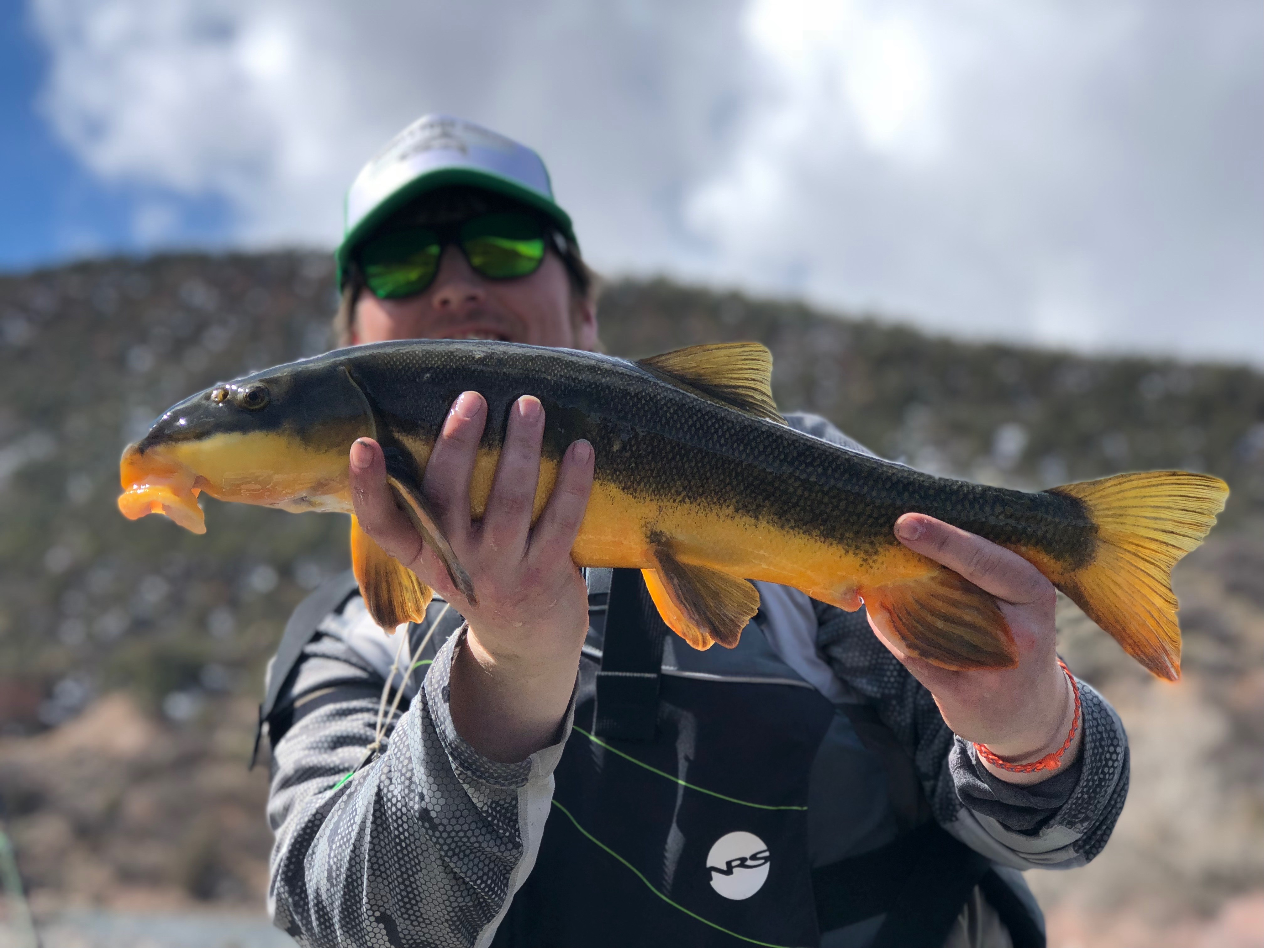 533f0241d2b3e Five Underrated Species to Fly Fish for in Colorado – blog ...