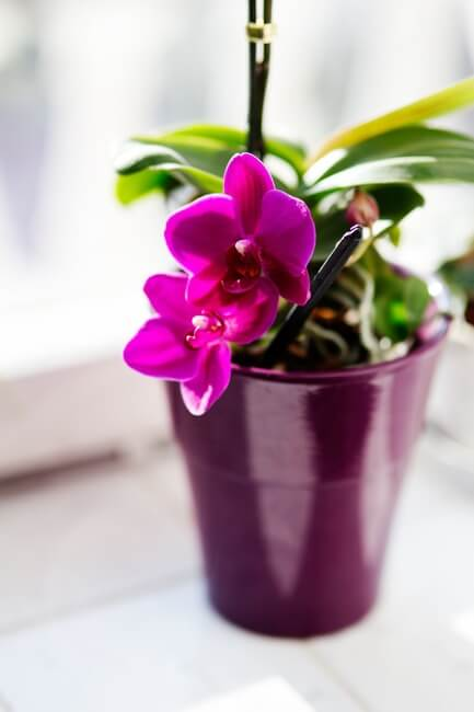 flower-pink-houseplants-orchid-large